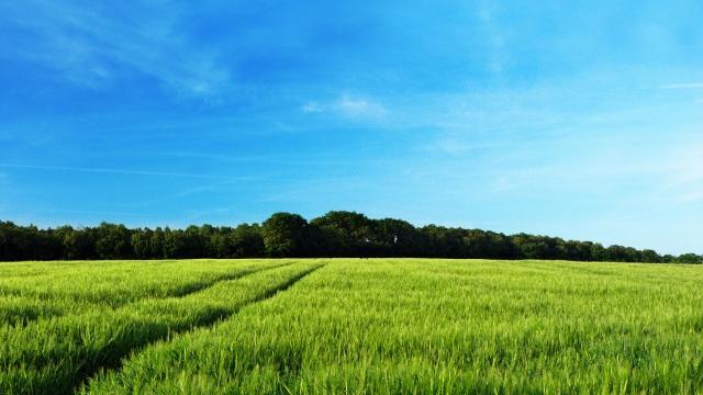 Зеленеющее поле