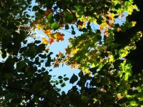 Обои Под пологом леса: Небо, Листья, Ветки, Природа