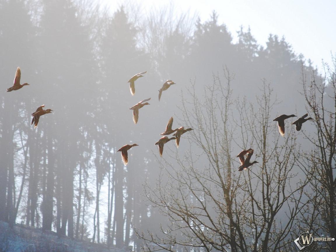 Обои весна туман утро весна птицы