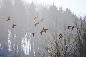 Обои Весна: Туман, Утро, Весна, Птицы, Природа