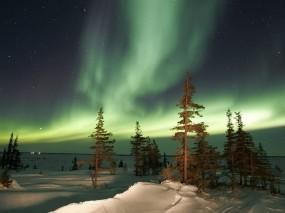 Обои Северное сияние: Снег, Деревья, Ночь, Вода и небо