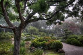 Обои Японский сад: Деревья, Сад, Япония, Природа