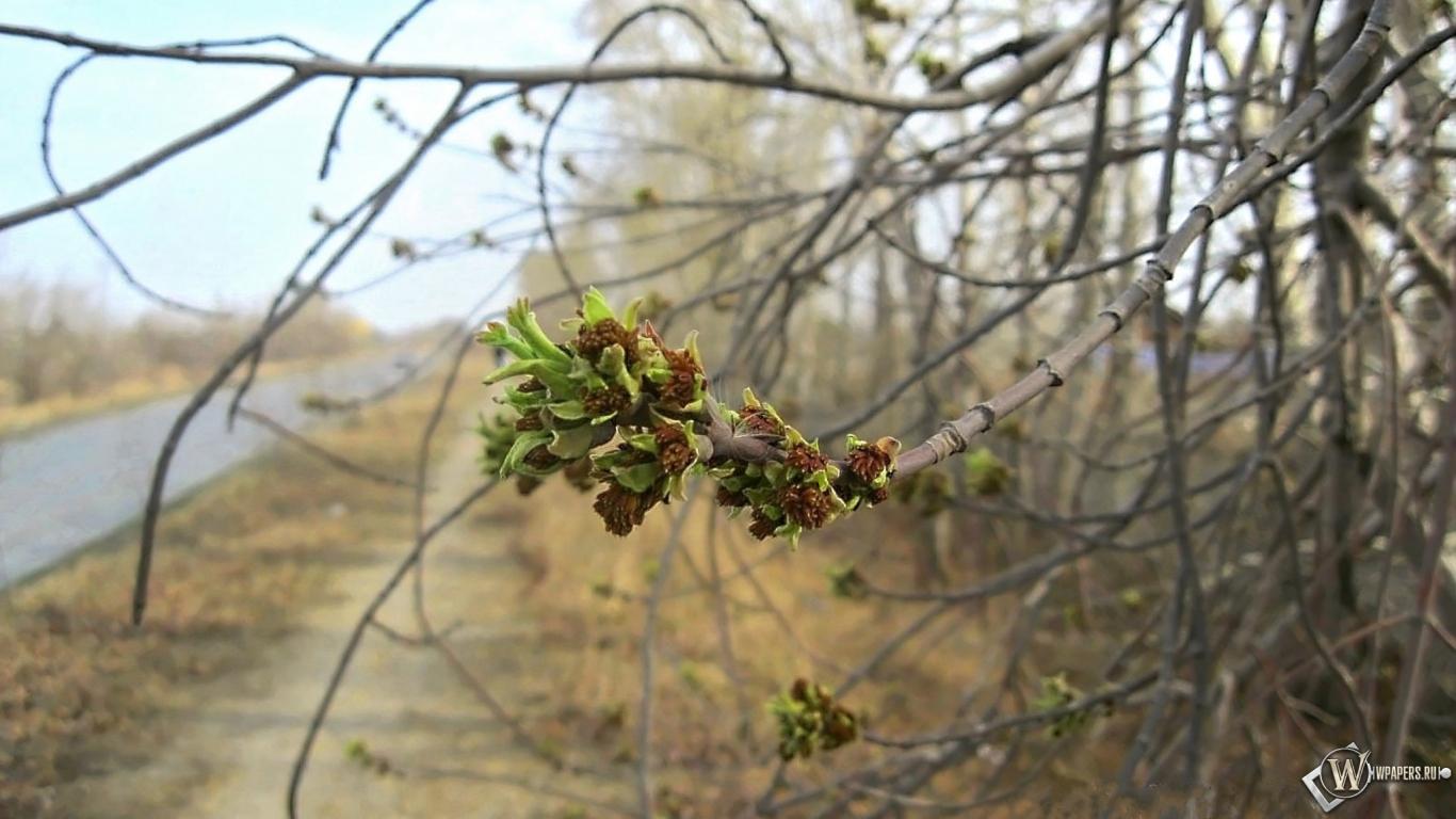Картинки для рабочего стола природа апрель