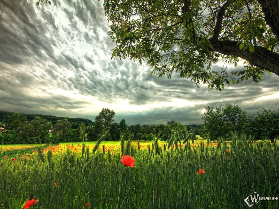 Красивое поле 1152x864