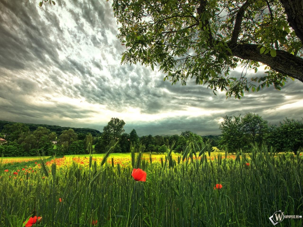 Красивое поле 1280x960