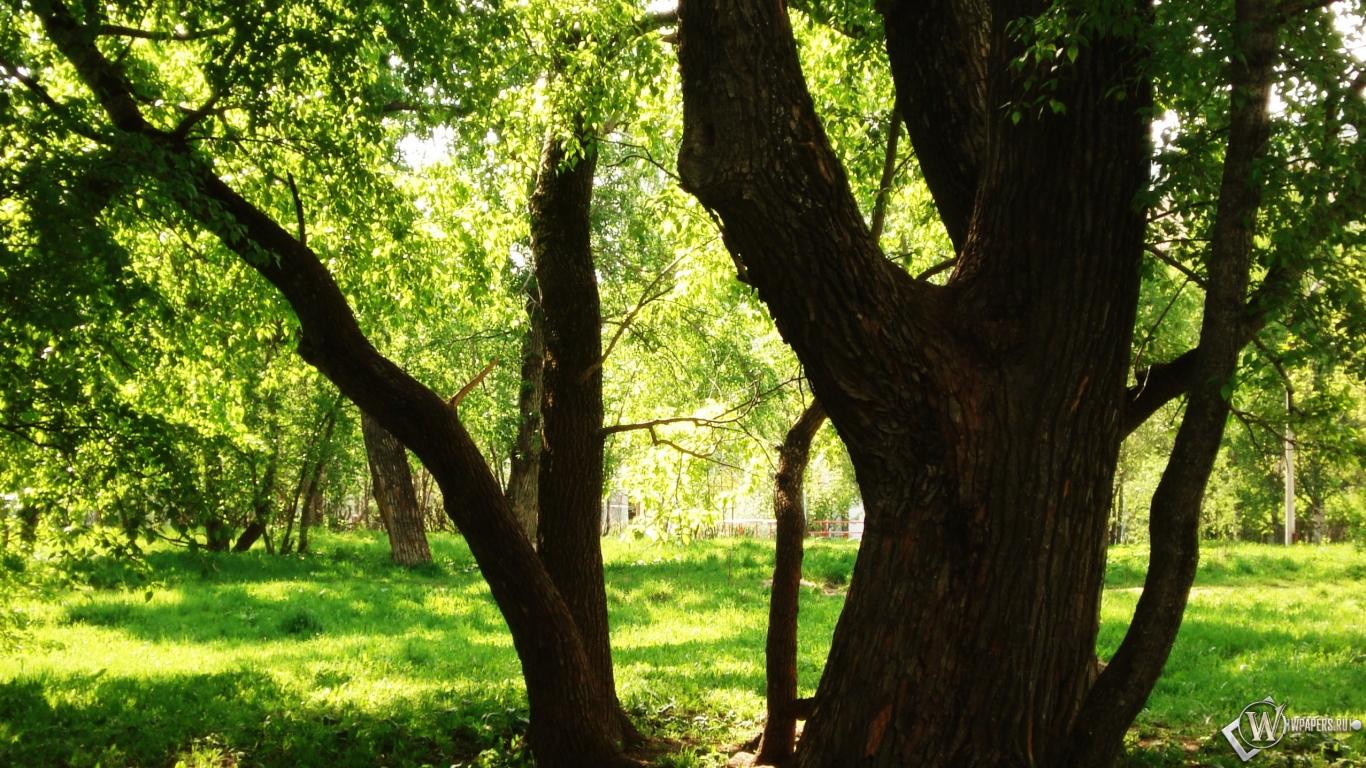Деревья зелень обоев 94 деревья