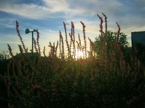 Обои Час заката: Солнце, Закат, Небо, Цветы, Лето, Природа