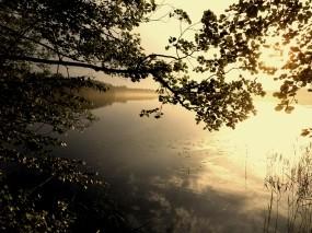 Обои Лесное озеро: Деревья, Озеро, Ветка, Природа