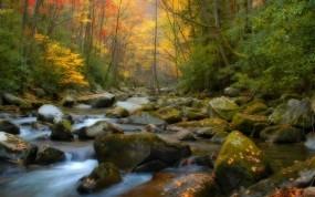 Обои Осенний ручей: Лес, Камни, Осень, Ручей, Осень
