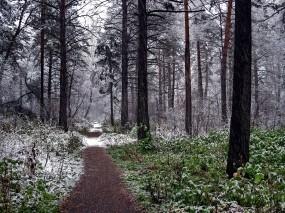 Обои Пасмурный осенний день: Лес, Деревья, Природа, Осень, Пейзаж, Осень