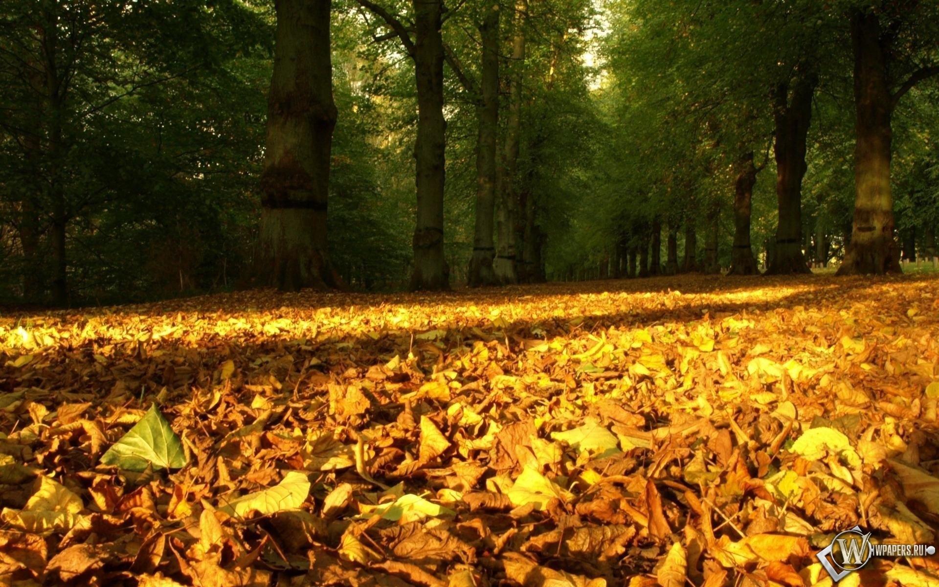 опавшие листья 1920x1200