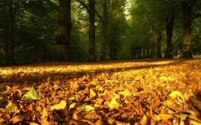 Обои опавшие листья: Природа, Осень, Осень