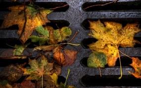 Обои Опавшая листва: Дорога, Макро, Листья, Люк, Осень