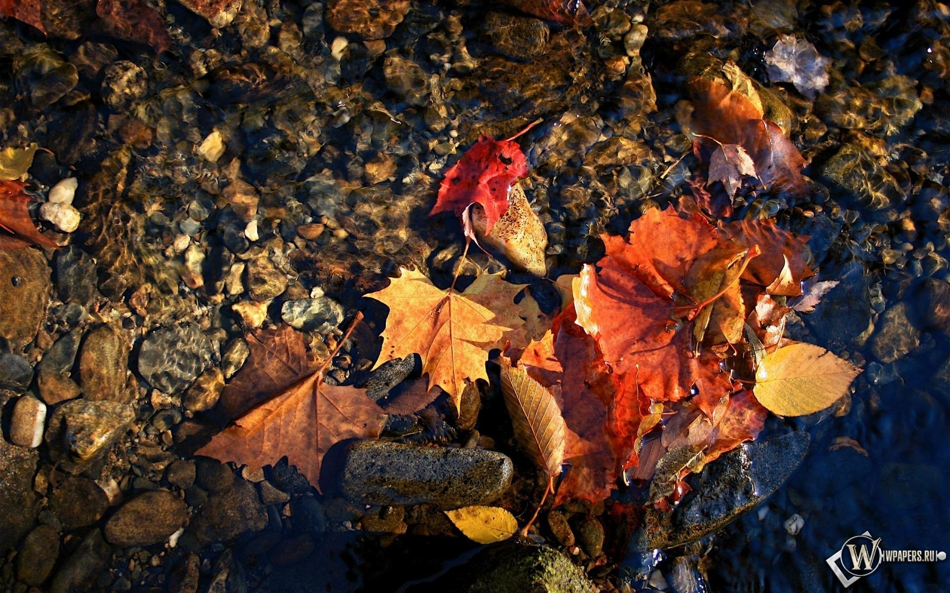 красные листья в воде 1920x1200