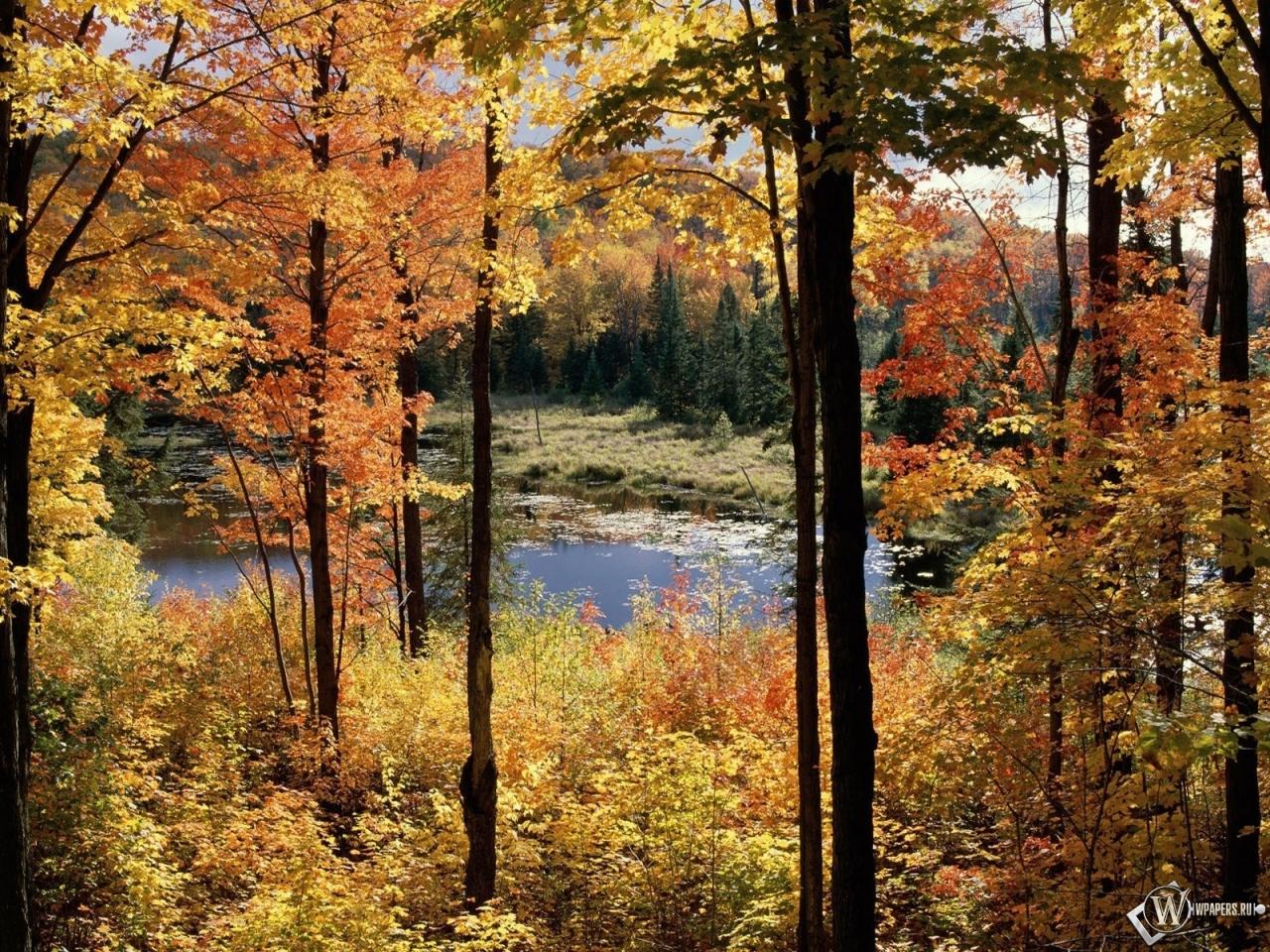 Осенний пейзаж 1280x960