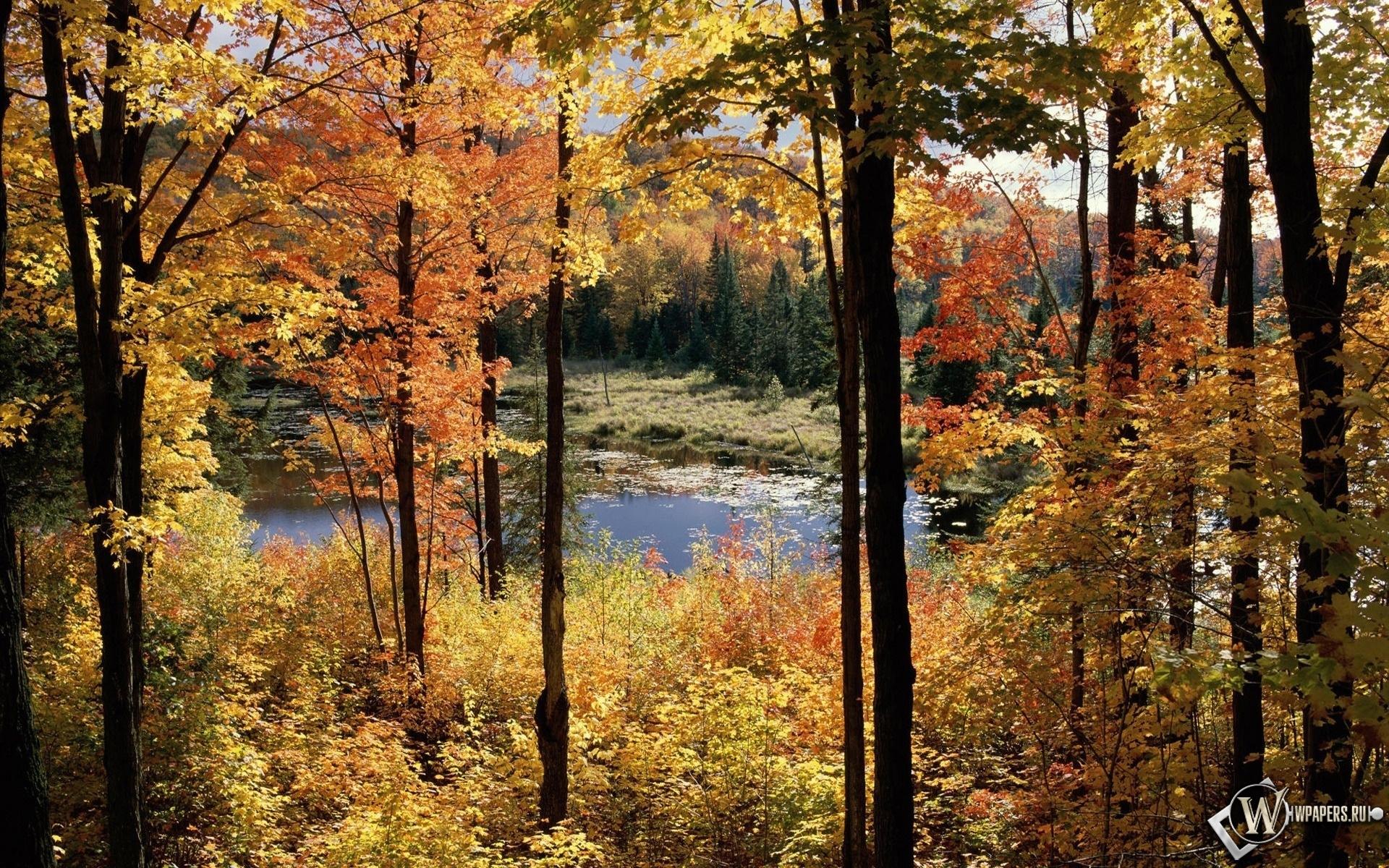 Осенний пейзаж 1920x1200