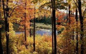 Обои Осенний пейзаж: Деревья, Осень, Пейзаж, Болото, Осень