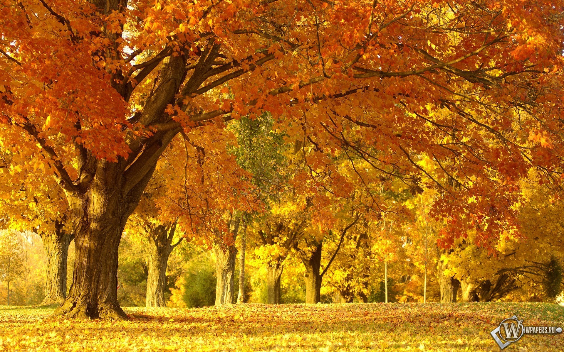 Осенняя аллея лес деревья природа