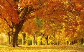 Обои Осенняя аллея: Лес, Деревья, Природа, Осень, Листва, Парк, Пейзаж, Осень