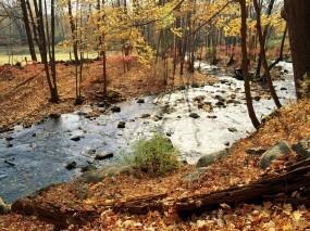 Обои Осенняя река в лесу: Река, Осень, Листья, Осень