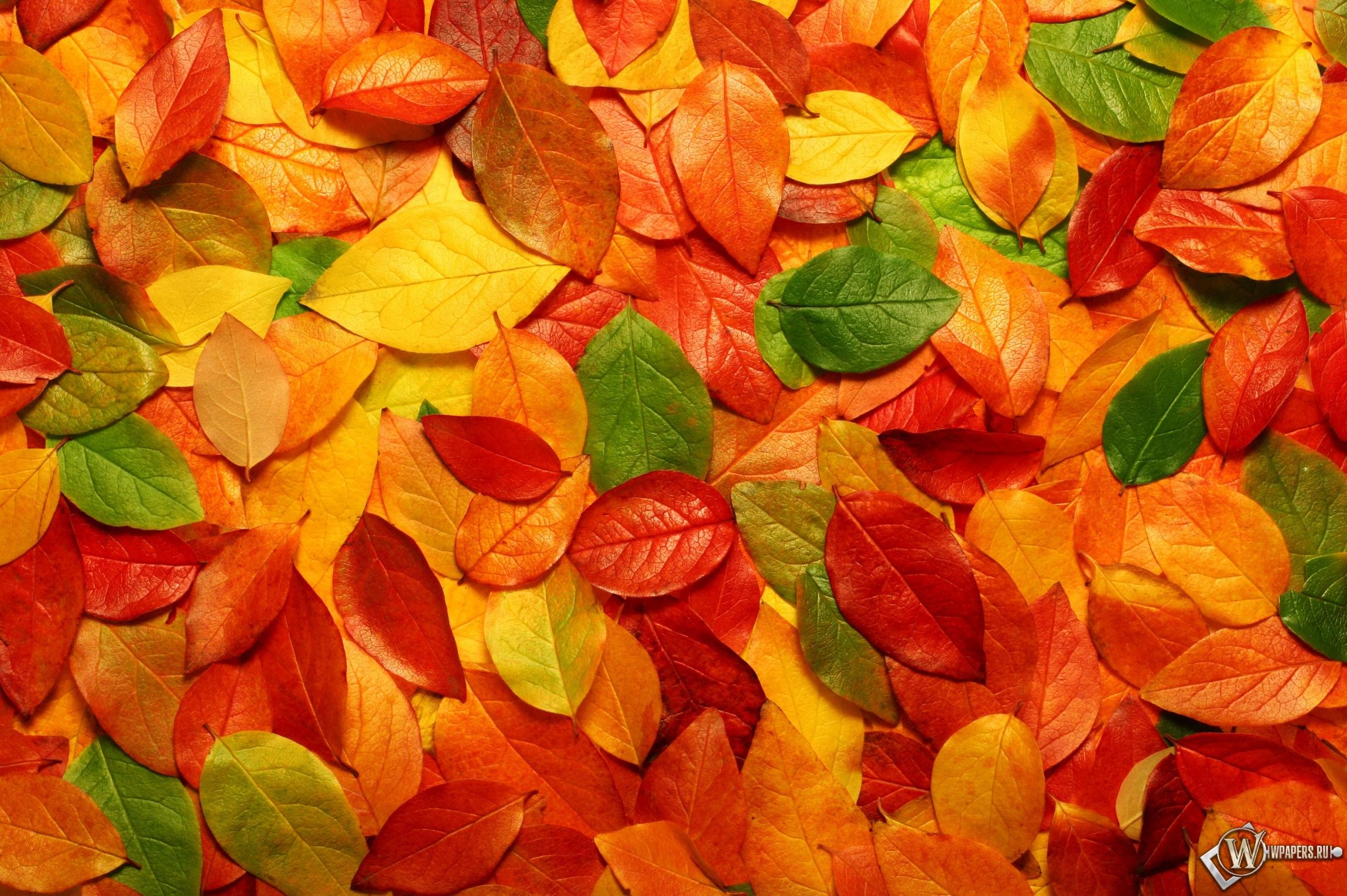 Осенние листья 2300x1530