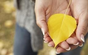Обои Осенний лист: Осень, Лист, Руки, Желтый, Осень