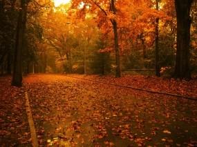 Обои Красная осень: Дорога, Деревья, Осень, Листья, Природа