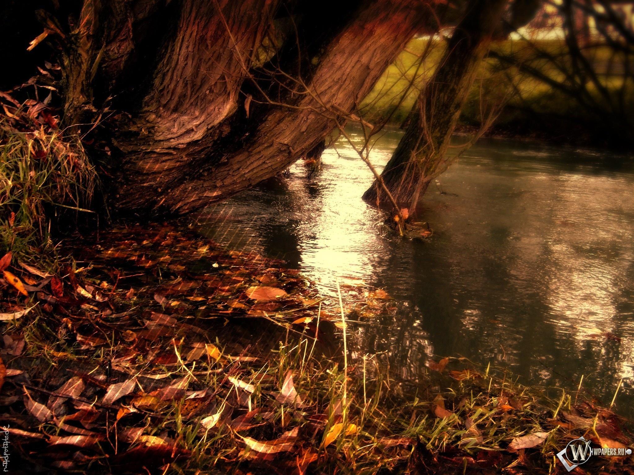 Опавшие листья 2048x1536