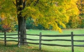 Обои Ранняя осень: Забор, Осень, Дерево, Осень