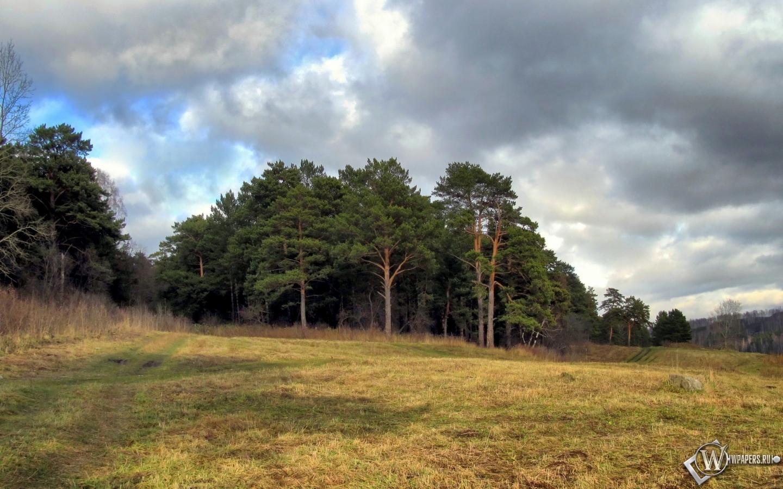 Обои осенний лес лес природа сосны