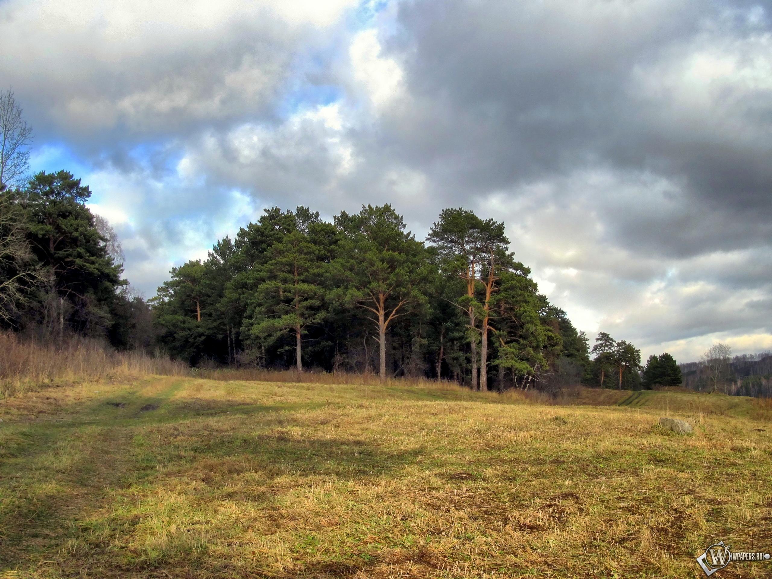 Осенний лес 2560x1920