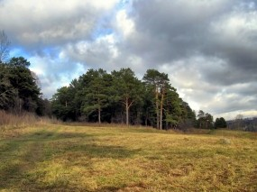Обои Осенний лес: Лес, Природа, Сосны, Осень, Осень