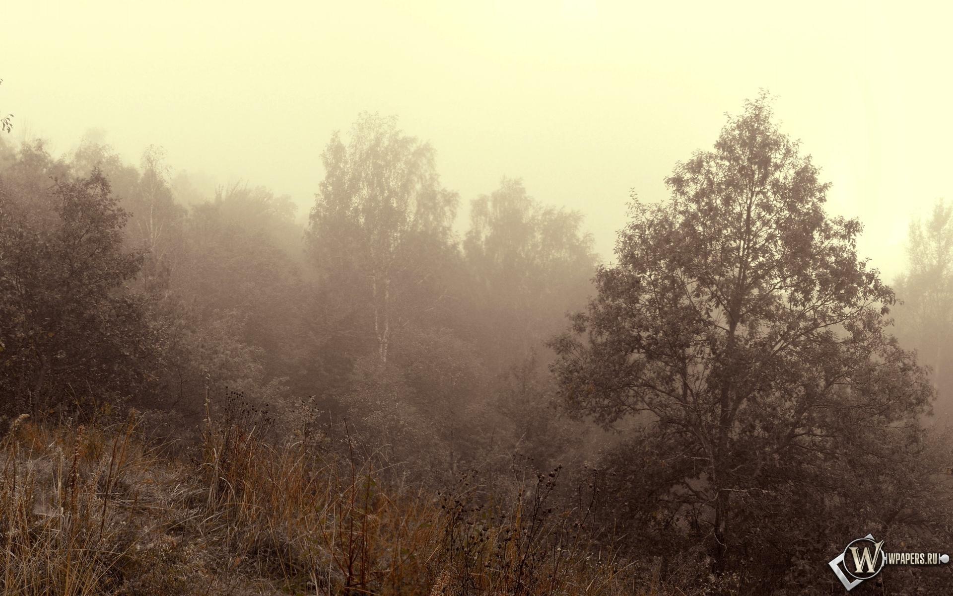 Осенний туман 1920x1200