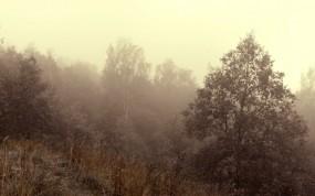 Обои Осенний туман: Деревья, Туман, Осень, Осень