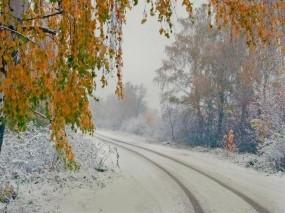 Обои Снег осенью: Снег, Дорога, Осень, Берёза, Осень