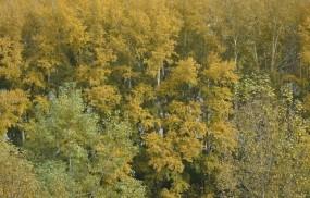 Обои Осень пришла: Деревья, Осень, Природа