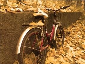 Обои В последние дни тепла...: Листья, Велосипед, осенние, Осень
