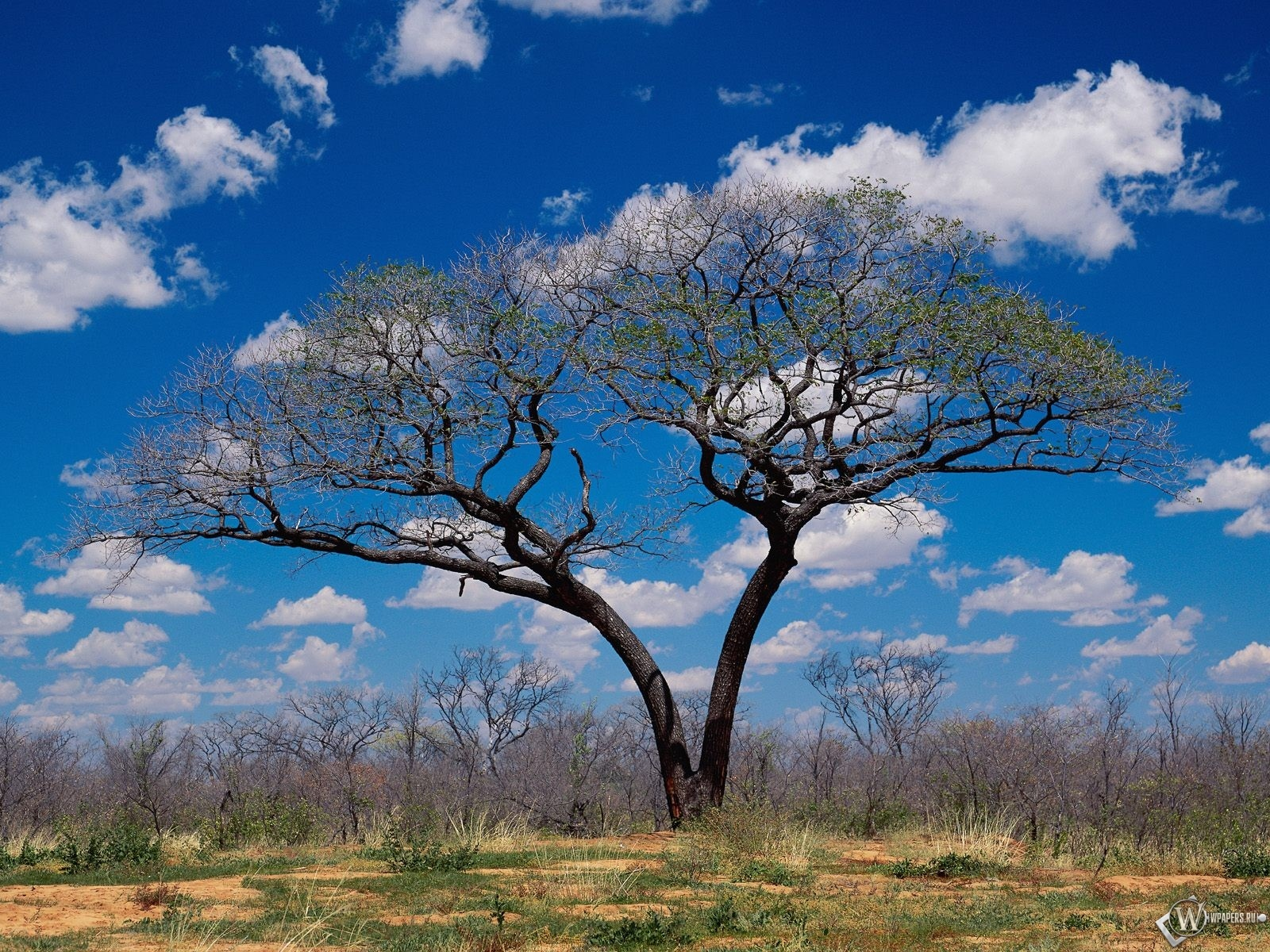 Опавшее дерево осенью 1600x1200
