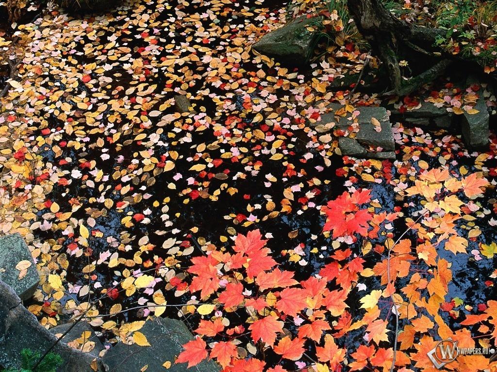 Желтая листва в луже 1024x768