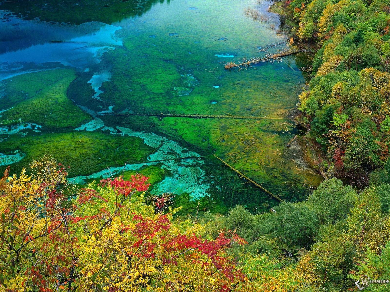 Осеннее болото 1600x1200