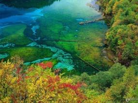Обои Осеннее болото: , Осень