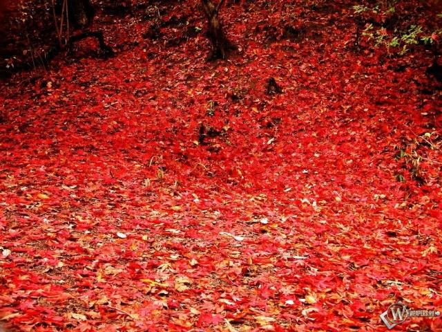Осенняя листва