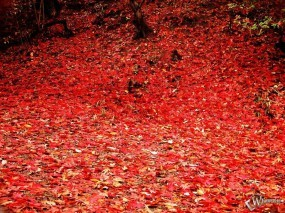 Обои Осенняя листва: , Осень