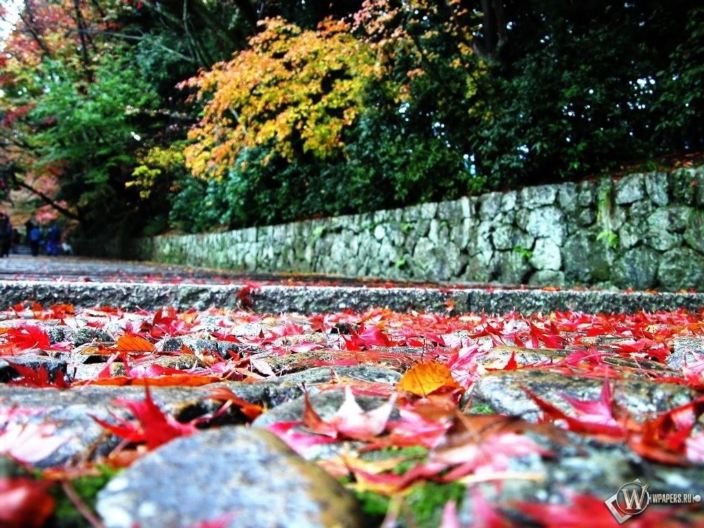 Осенние листья на тропинке 1024x768