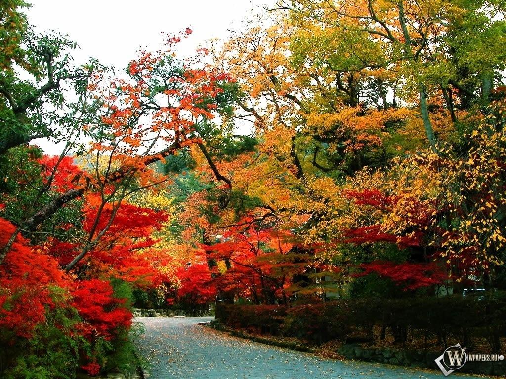 Осенняя тропинка 1024x768