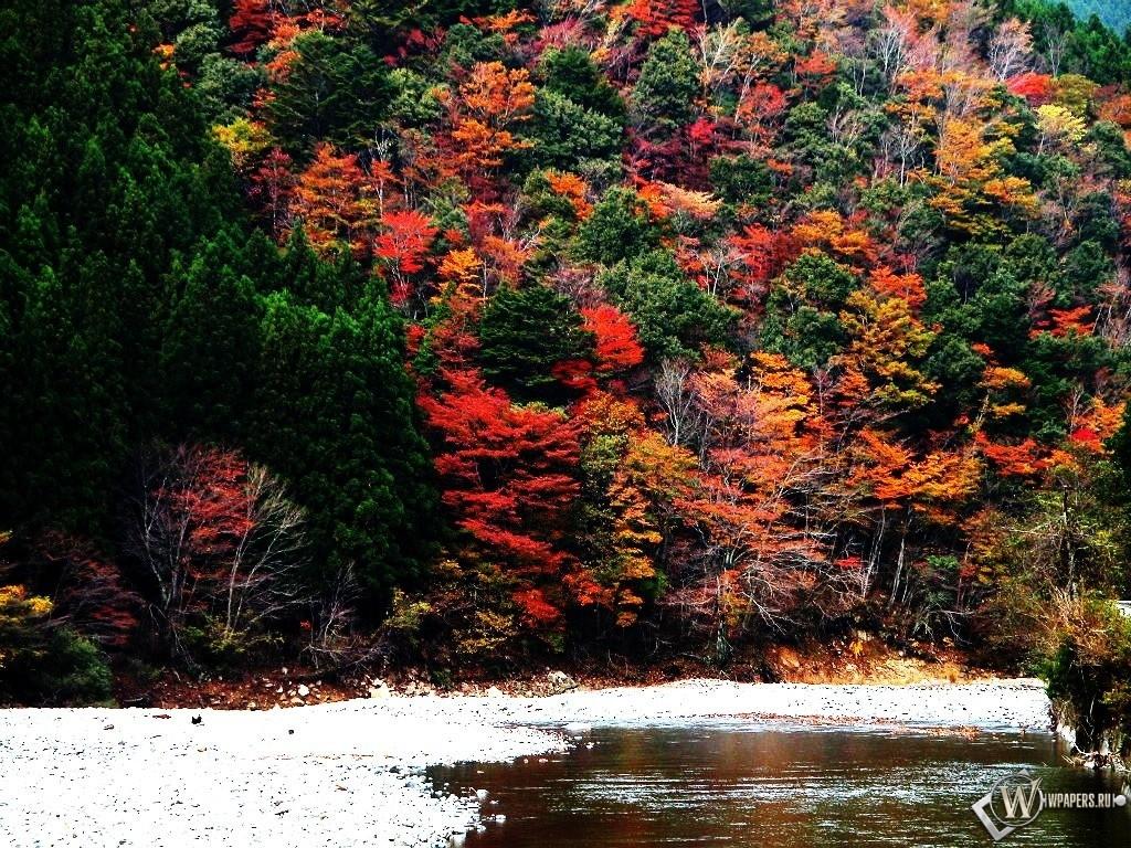 Лес на горе осенью 1024x768