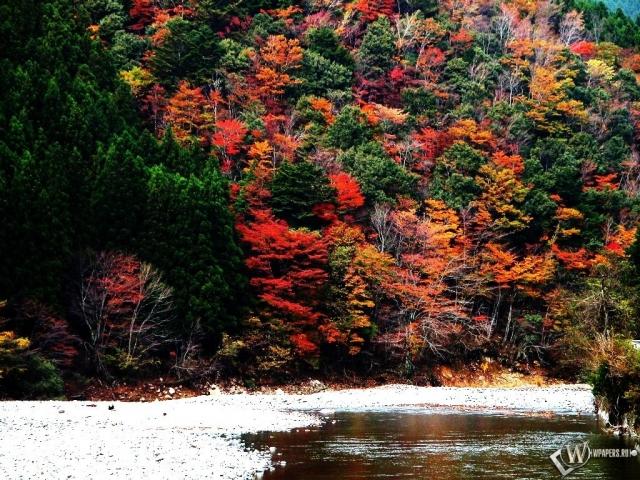 Лес на горе осенью