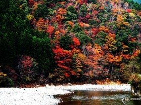Обои Лес на горе осенью: , Осень