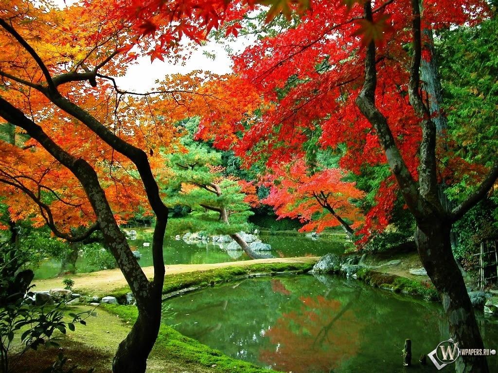 Осенний парк 1024x768