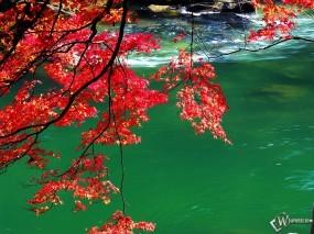 Обои Осенний дуб над рекой: , Осень